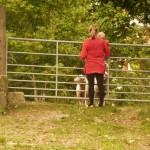Looking at the sheep!