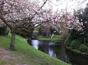Sefton Park in bloom