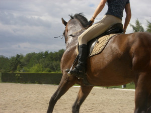 Horse riding stress busting