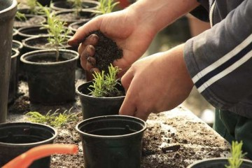 Potting plants can be a great stress relieving exercise